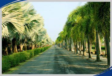 Экскурсия из Паттайи Тайна Сиама