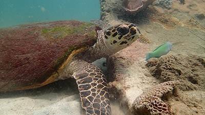 занятие знакомство с подводным миром