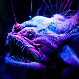 Аквариум морских чудовищ