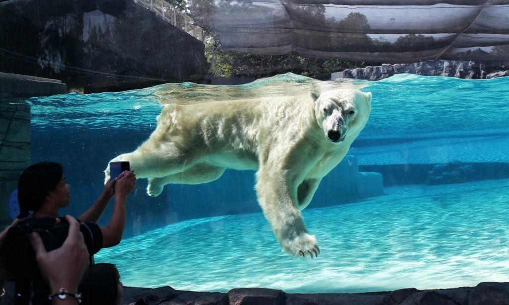 Inuka swimming