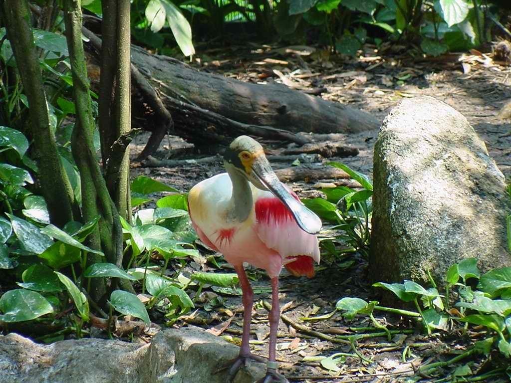 Singapore-Jurong_Bird_Park