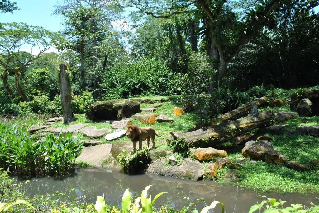Singapore_Zoo_