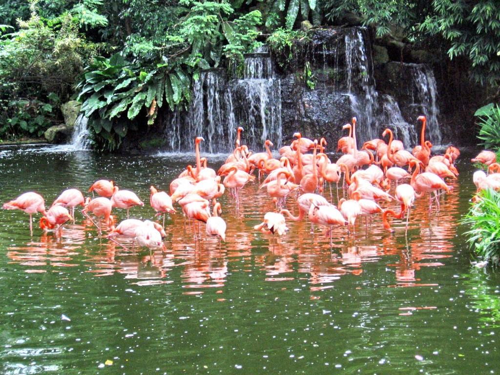 flamingo-lake