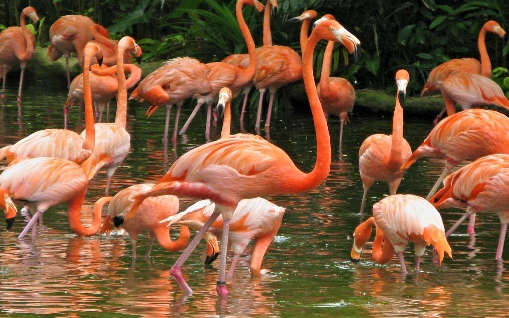 pink-flamingos-at-jurong-bird-park