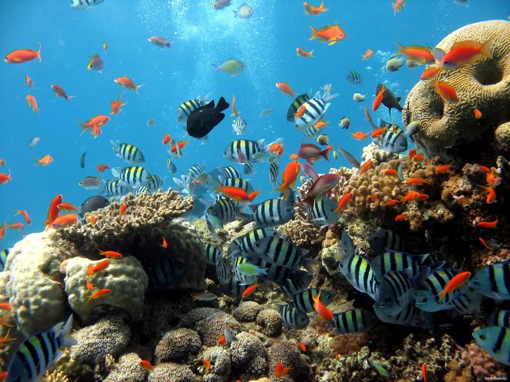 singapore-underwater-world
