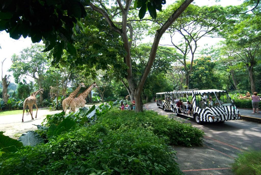 sz_tram-giraffes-light