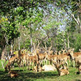 В мире животных - экскурсия из Паттайи
