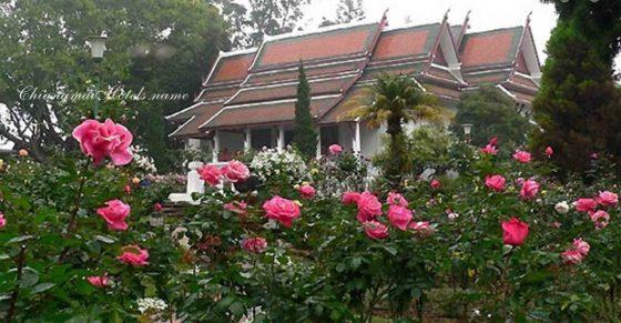 Золотой треугольник, Таиланд