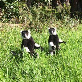 Мадагаскар — путешествие в Африку