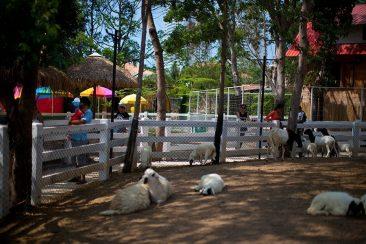 Экзотик Кантри ферма в Паттайе (Exotic Country Farm)