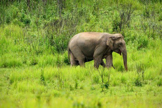 Слон в парке Кхауяй