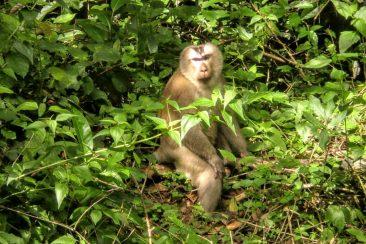 Дикие животные в парке Кхауяй